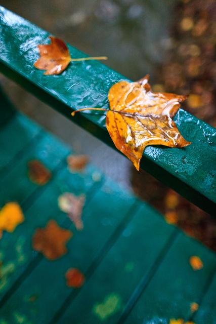autumn, fall, moodboard, relax, chocolate, peace