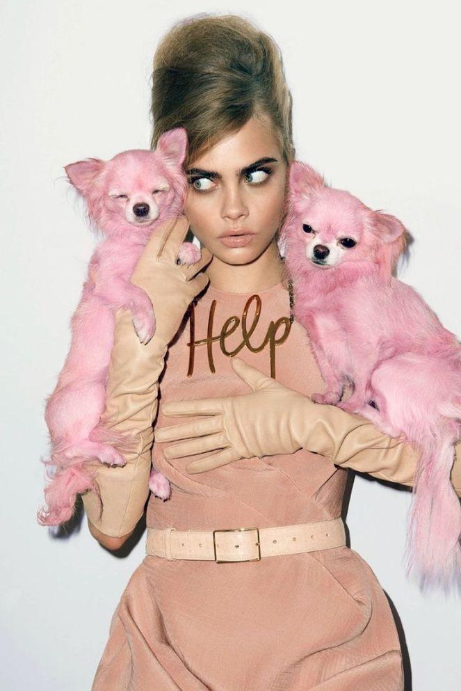 dog, fashion, editorial, magazine, photography