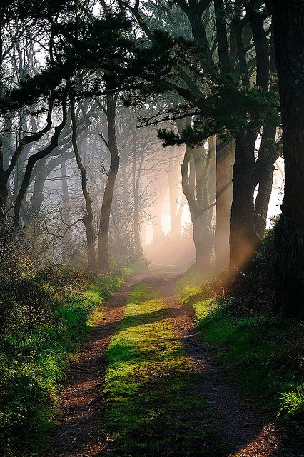 walking, nature, health